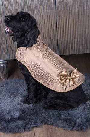 بالصور: أغلى جاكيت في العالم يرتديها كلب!