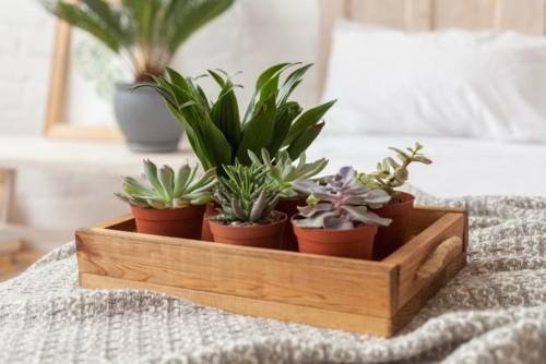 5 نباتات تساعد على النوم الهادىء