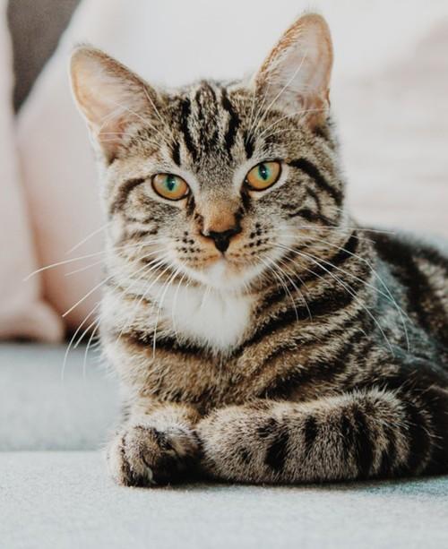 بالصور: إنقاذ قطة متجمدة وإعادتها للحياة