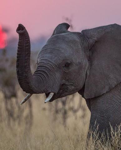 مصر تفقد آخر فيل في البلاد