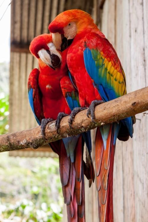 لماذا حظرت مصر استيراد طيور الزينة؟
