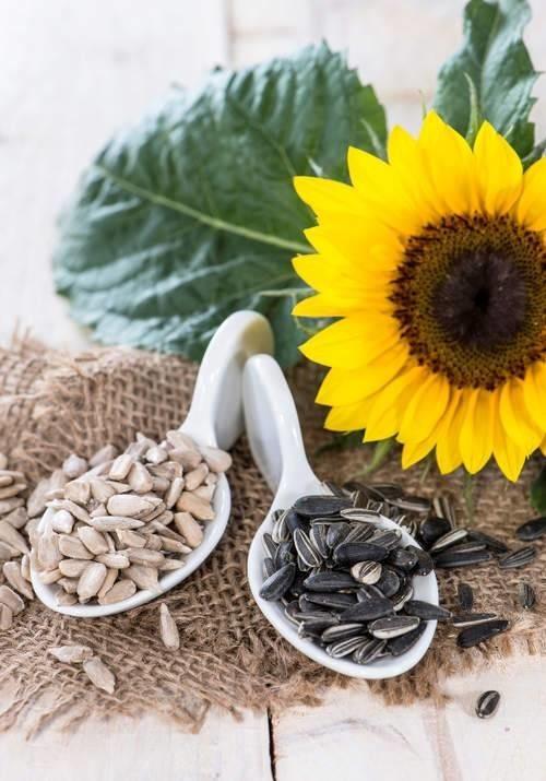 كيف تساعد بذور عباد الشمس في تعزيز صحتك؟