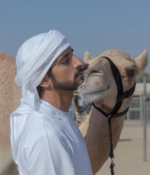 بالفيديو:الإبل تستجيب لنداء ولي عهد دبي