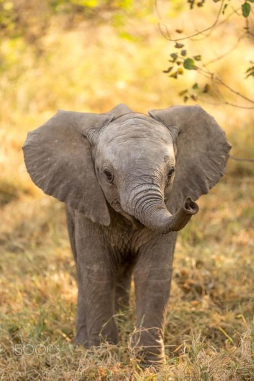 بالفيديو: لحظات مدهشة لفيل يحاول الاستحمام