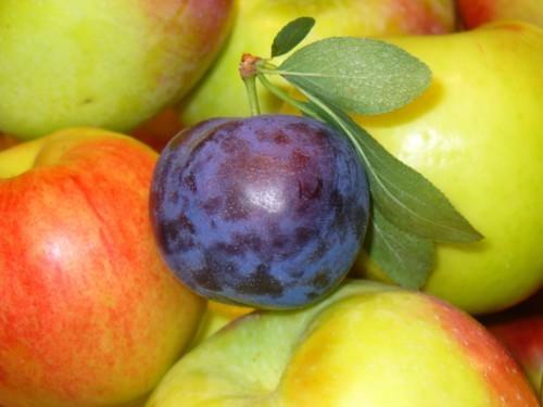 7 فوائد صحية للخوخ