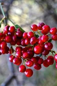 أحمر الشفاه، في الطبيعة