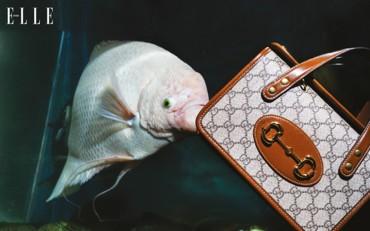 حياة مائية مع حقائب غوتشي