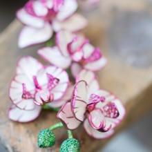 زهور الأوركيد مع شوبارد